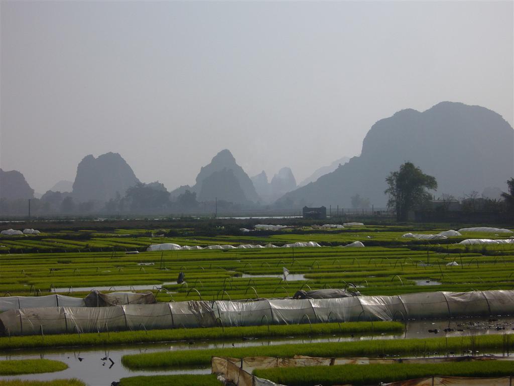 Paysage de montagnes escarpées, rizières inondées: le Vietnam est un pays au ras de l'eau, en ce moment c'est la saison sèche, qu'est-ce que ça doit être à la saison de la mousson !